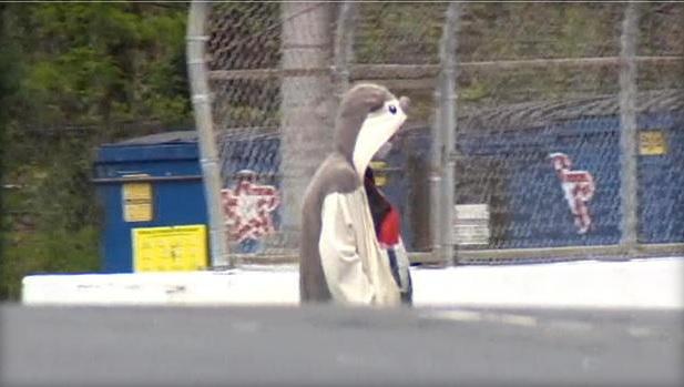 man in panda suit_189035