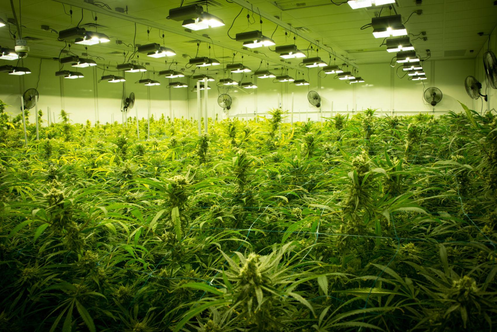 Medical marijuana_1520888924492.jpg.jpg