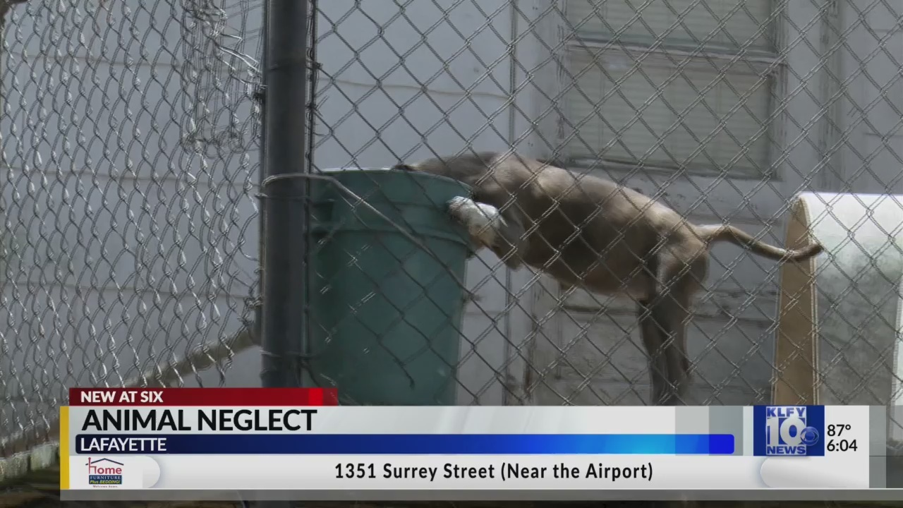 Lafayette Woman Says Her Calls About Allegations Of Animal