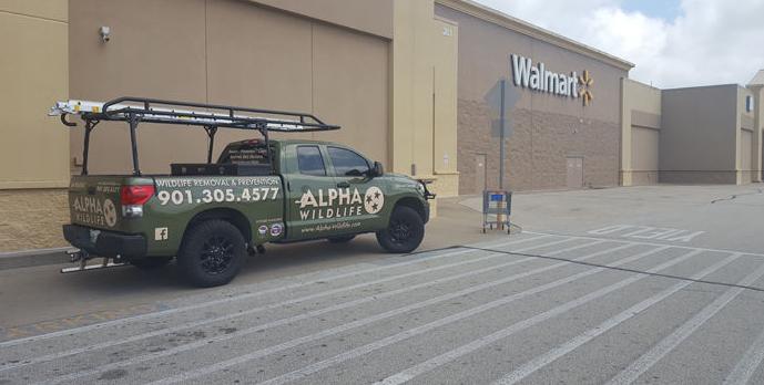 Racoons Walmart 3_1531763652387.PNG.jpg