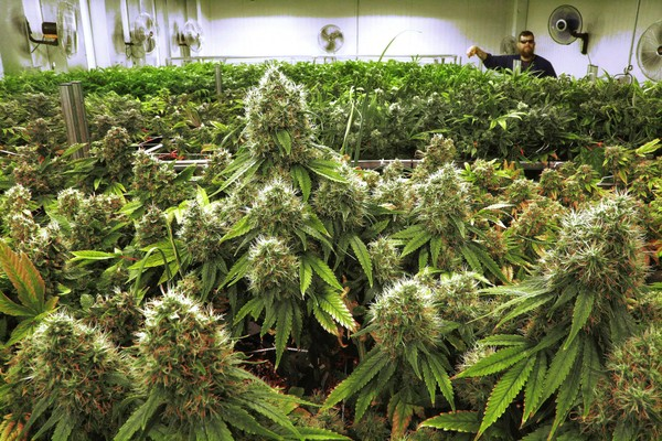 medical-marijuana_1532464051995.jpg