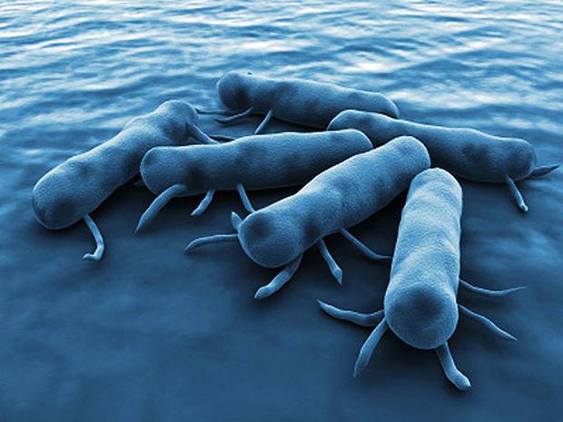 Salmonella-Bacteria_113177