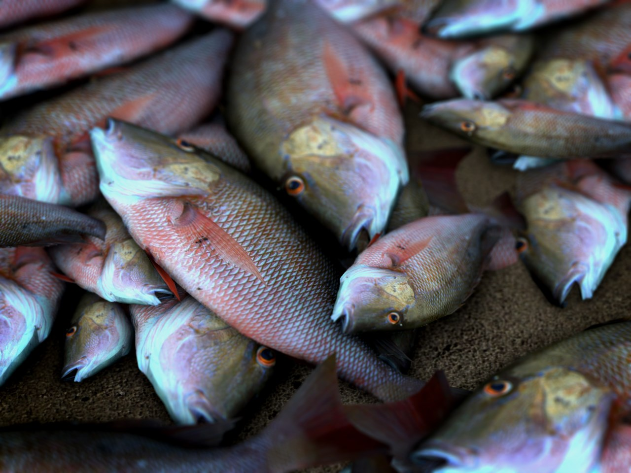 fish kill_1515800927460.jpg.jpg