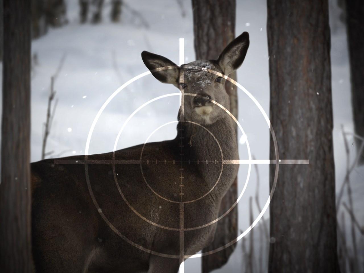 deer hunting_384468