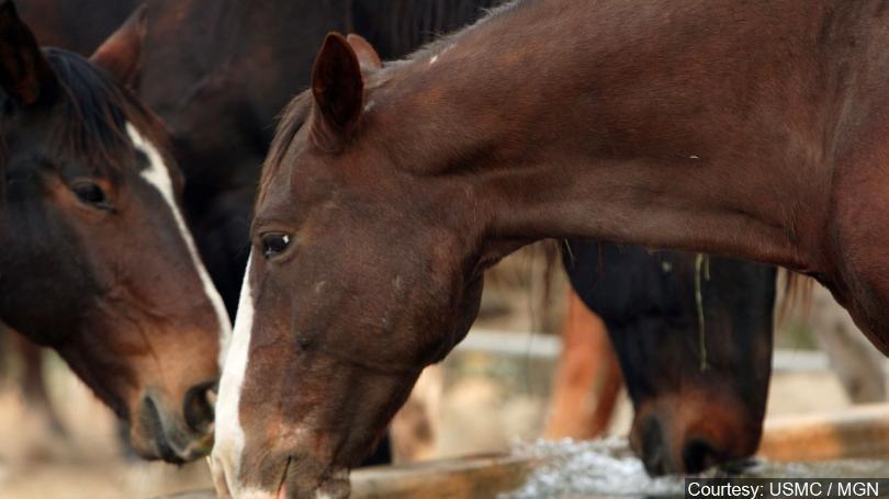 horses-generic_720_1536177647706.jpg