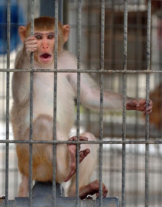 monkey TDA_1537293886093.jpg.jpg