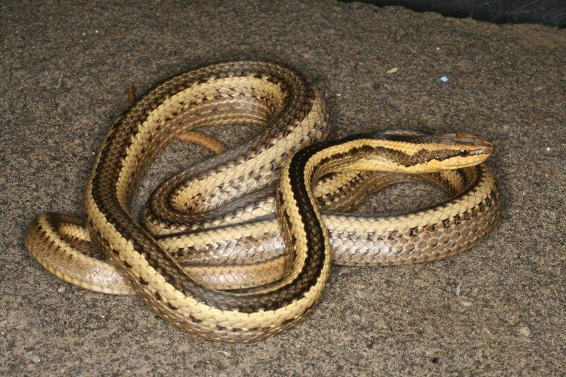 snake_1540071762902.jpeg