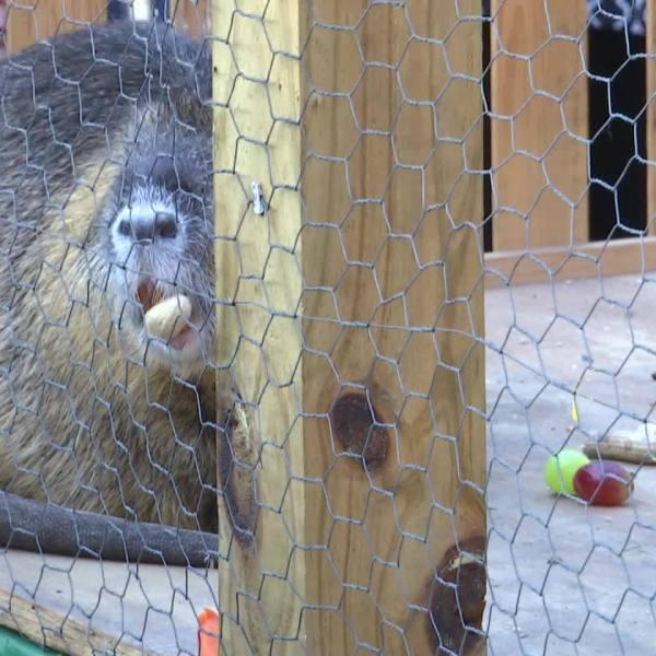 Cajun Groundhog day