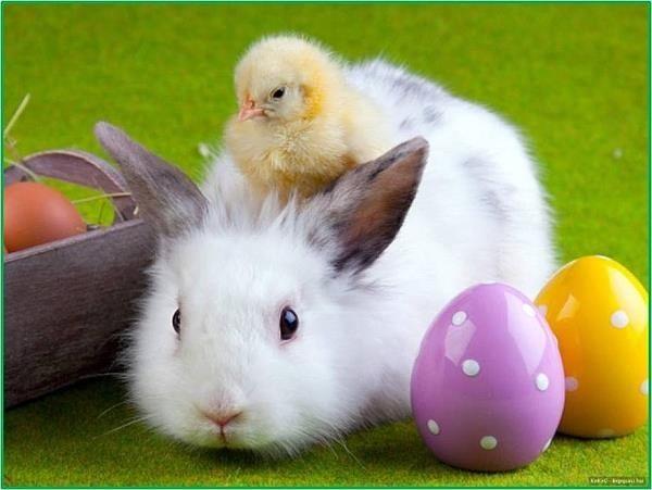 Easter-Bunny-Chick-And-Bunny (1)_1555630749768.jpg.jpg