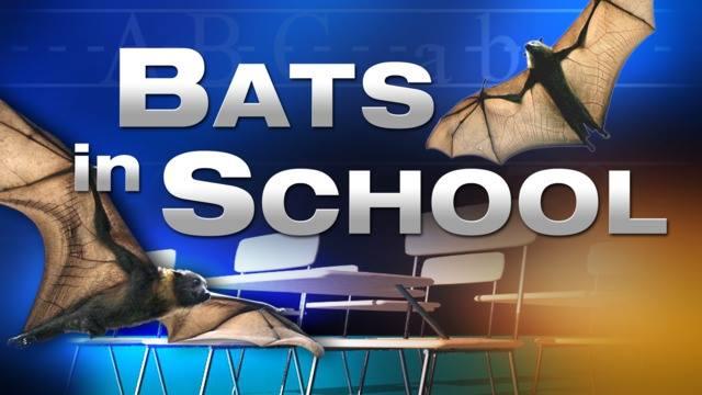 Bats_1550525113938.jpg