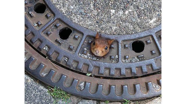 APTOPIX Germany Stuck Squirrel_1561237907833
