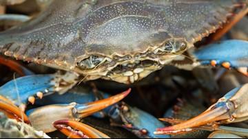 Crab_1559757584670.jpg