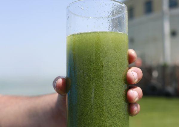 algae_1561222742094.jpg