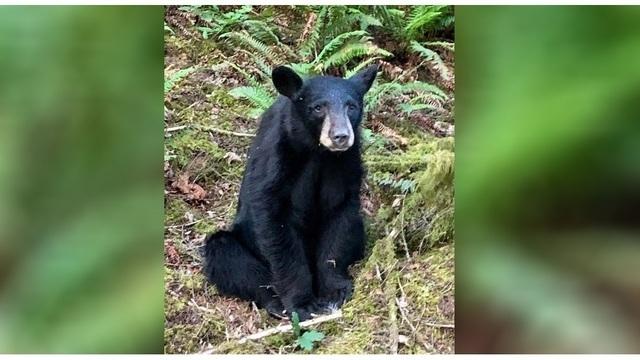 black bear killed_1560852280271.JPG_92754422_ver1.0_640_360_1560855795961.jpg_92758886_ver1.0_640_360_1560866514093.jpg.jpg