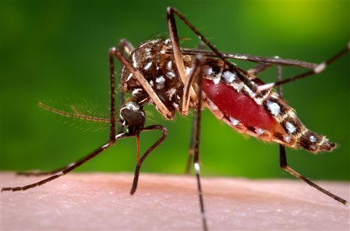 FEMA approves additional mosquito control spraying for parishes hit by hurricanes
