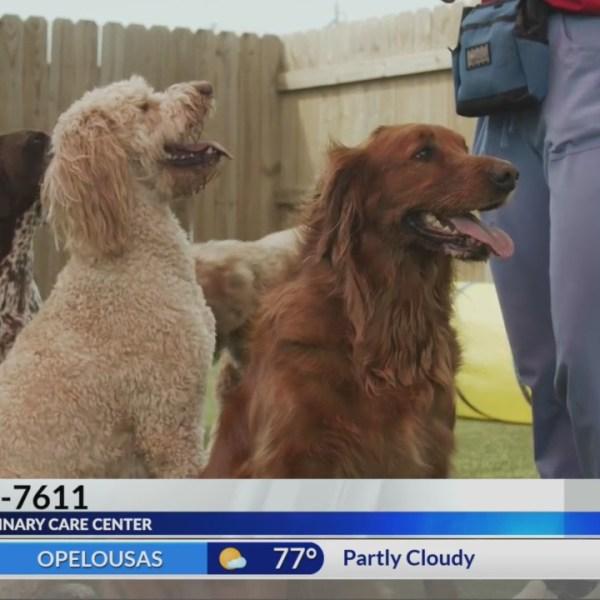 Meet Your Neighbor: Lafayette Veterinary Care Center
