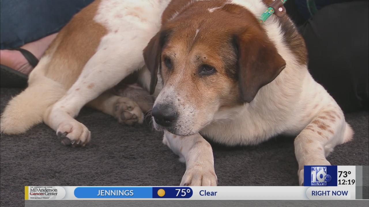 The Pet Stop: Animal Aid Vermilion Area